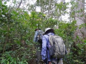 """やんばるの森が""""3時間で分かる""""やんばるの森遊歩ツアー"""
