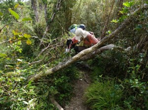 """沖縄本島の""""最高峰をめざす""""やんばるの森遊歩ツアー"""