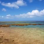 休止中:那覇近くでできる海の生きもの観察ツアー