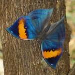 沖縄野生生物研究のための観察ツアー