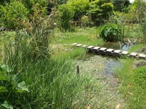 カエルやトンボ、バッタ、チョウなど地域の生き物を呼ぶことに成功した沖縄型ビオトープ