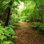 やんばる亜熱帯林が3時間で分かるツアー